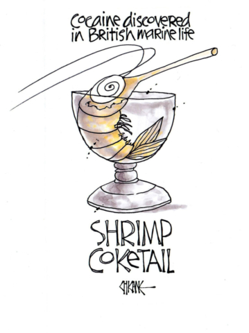 Cocaine discovered in British marine life. Shrimp Coketail drawing. Cartoon by Chicane.