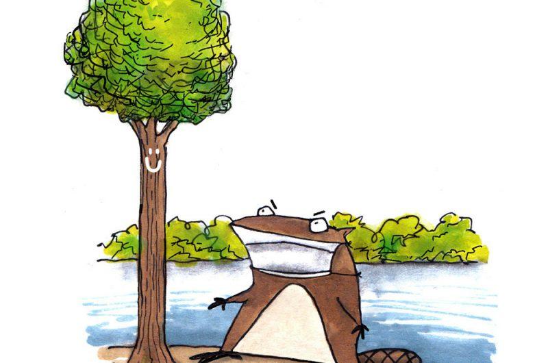 Bobrista Beaver lake Cartoon by Chicane